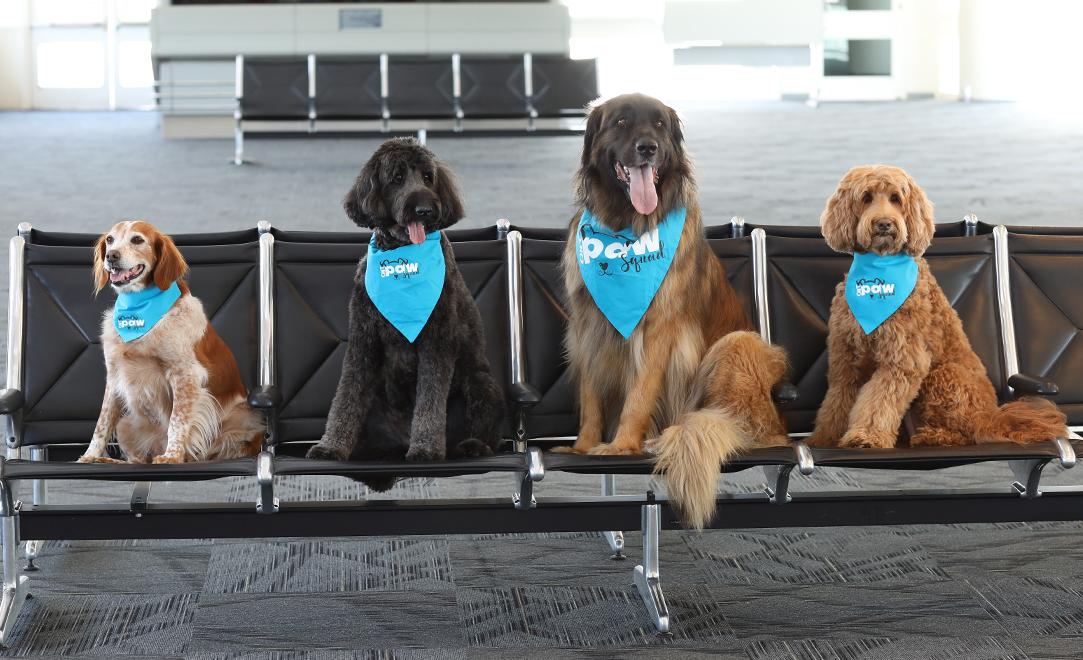 perros en el aeropuerto de ontario